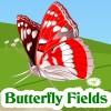 Butterfly  ..