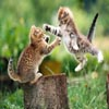 Cats Fight ..